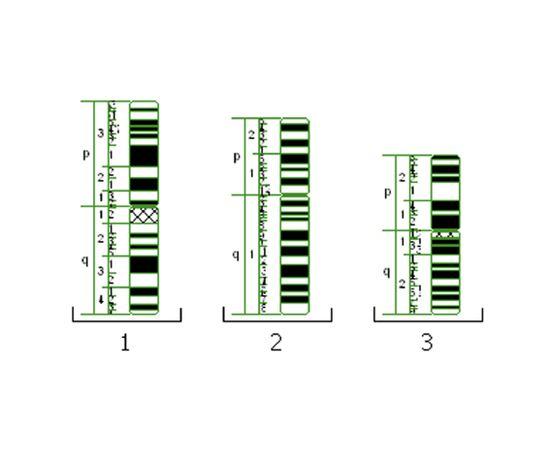 Vision Karyo® Цифровая система для хромосомного анализа (кариотипирование) — фото 3